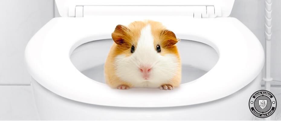 Hamster im WC